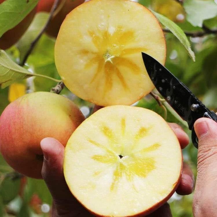 新疆阿克苏冰糖心苹果 5斤/带箱10斤