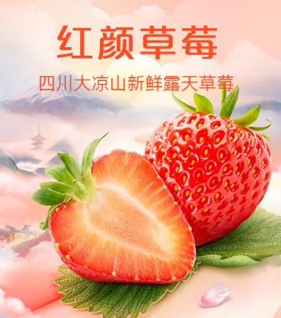 四川大凉山红颜草莓 新鲜露天草莓 2斤/3斤/5斤